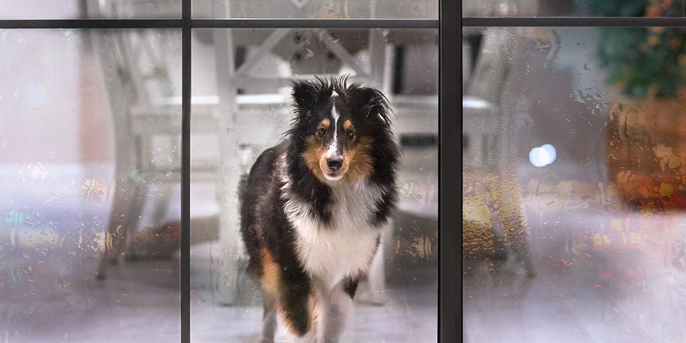 Bring pets indoors on cold nights