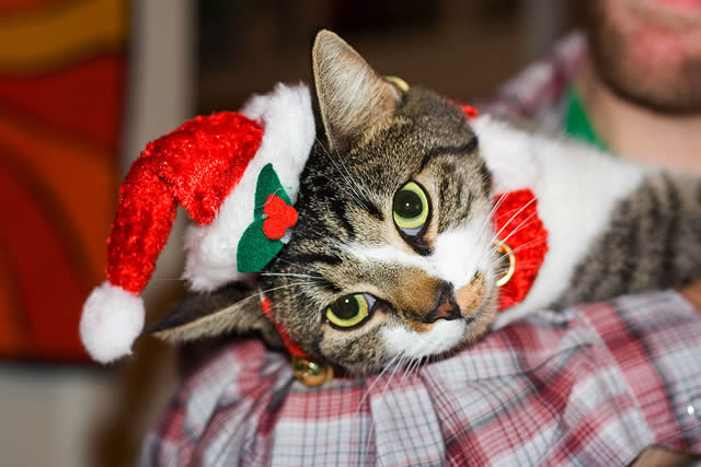 Kitty cat getting into the festive spirit