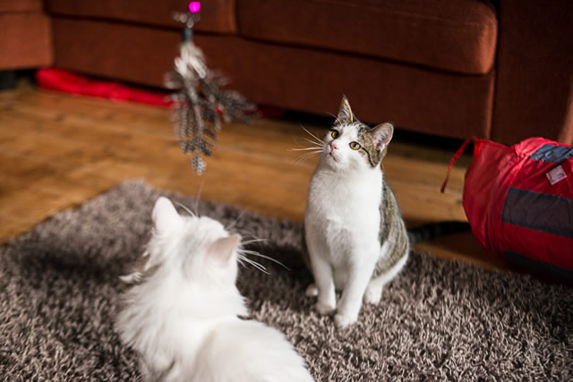 pensive_cat