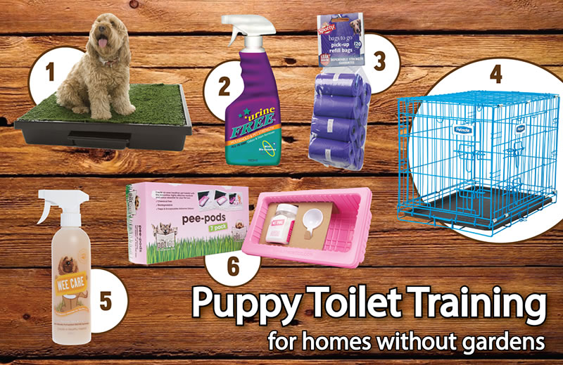 how to toilet training your puppy for homes without gardens
