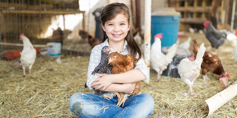 care for chickens in summer
