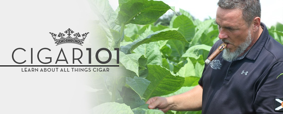 Heirloom 500 Connecticut Tobacco seeds w// how to grow booklet