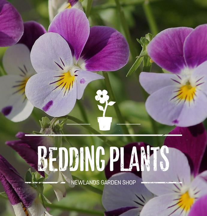 Buy Garden Plants Flowers Online Ireland Low Prices On All Garden Plants Shrubs Fast Shipping Newlands Garden Centre