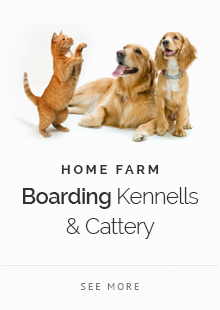 Boarding Kennells & Cattery