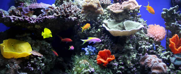 Showroom Aquariums