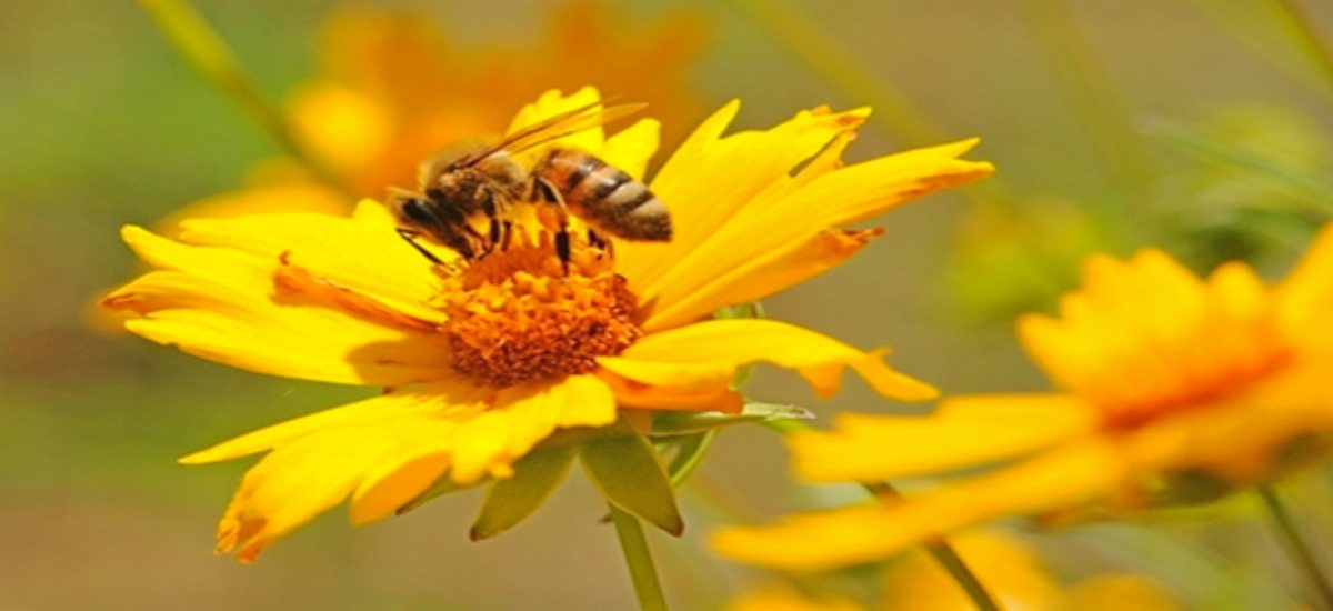 Looking for Ideas to create a Pollinator, or Eco Garden?