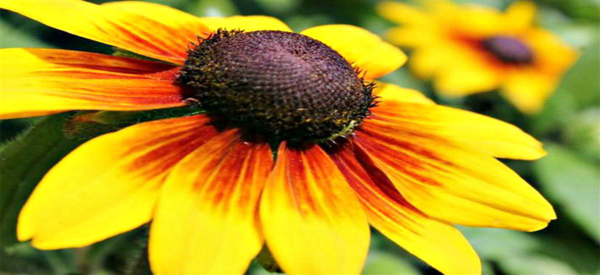 Blooming Perennials add Color to Any Landscape!