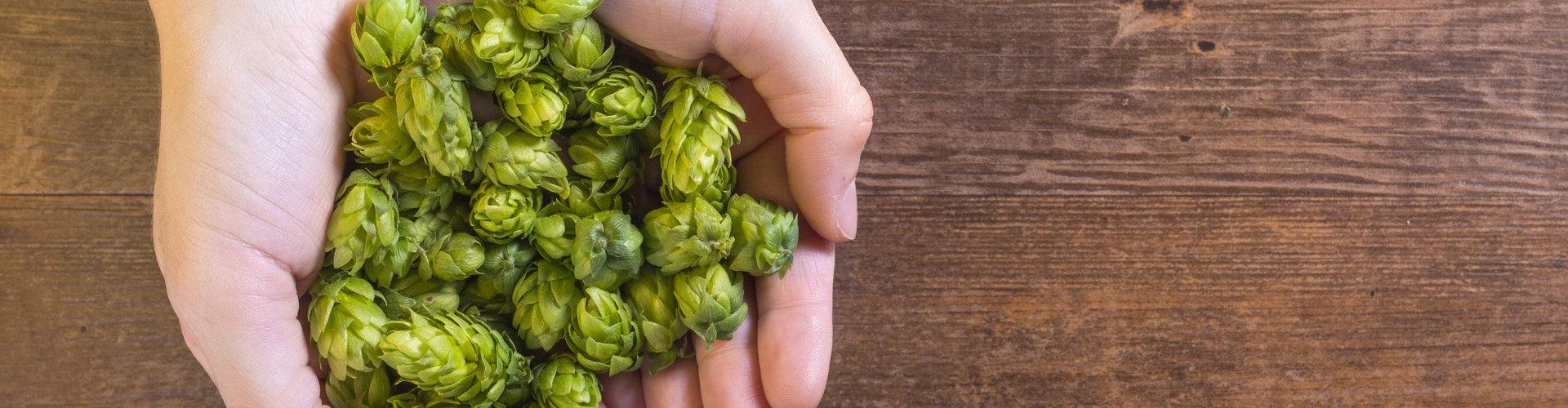 Homecraft Your Inner Beer Bliss