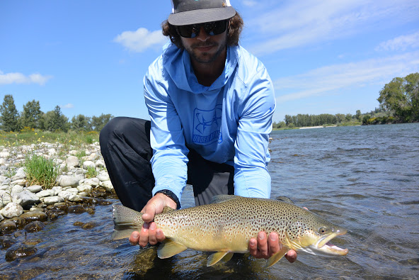Bow River Trout