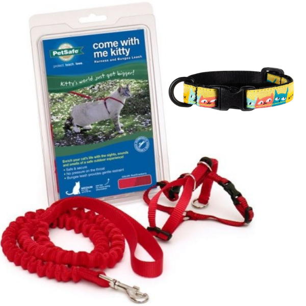 Collars, Leashes, & Harnesses