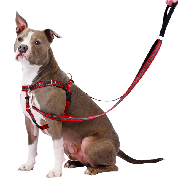 Collars, Harnesses, & Leashes