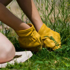 Fertilizers and weed prevention for your lawn and garden