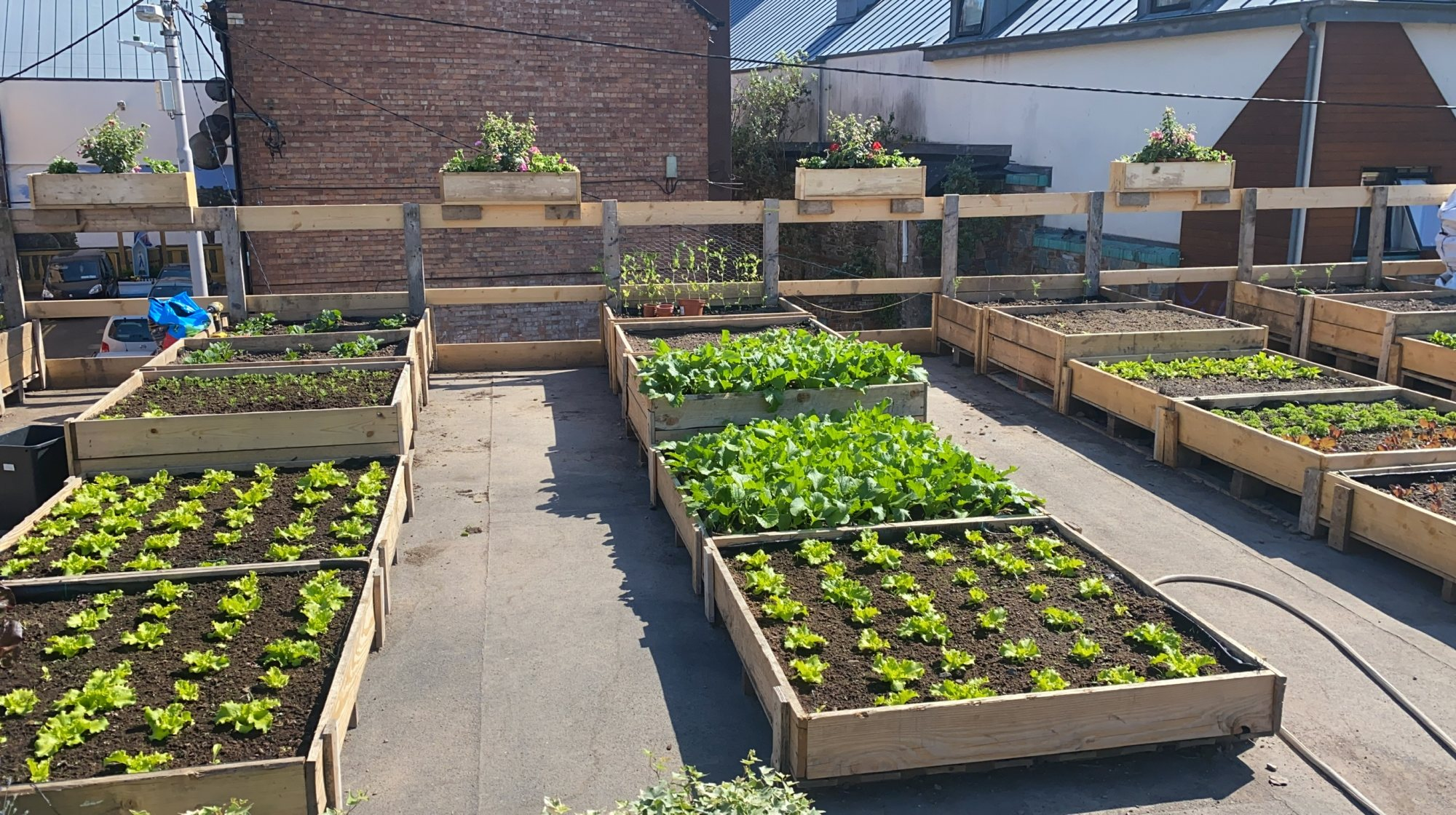 Sustainable Farming In The Heart of Cork City